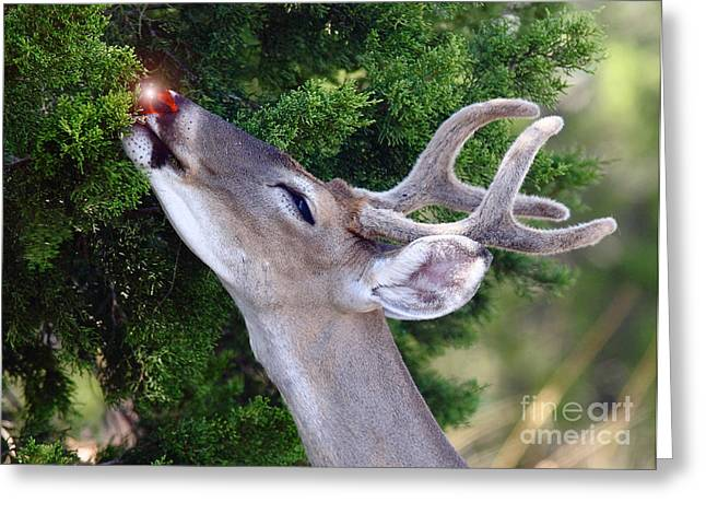 Rudolf Greeting Cards - Your Nose So Bright Greeting Card by Robert Frederick