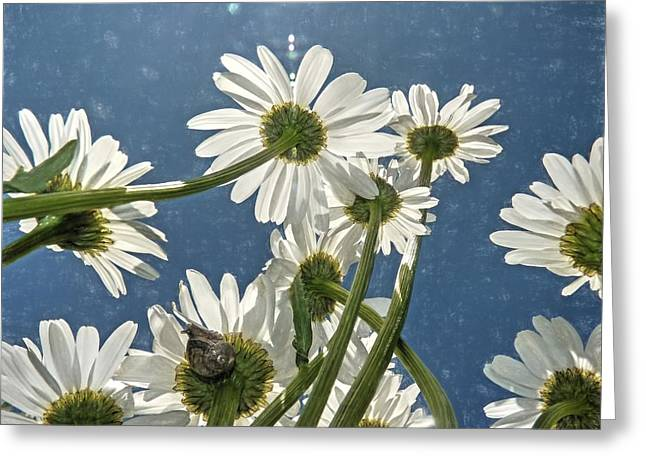 Greeting Card featuring the photograph You've Got Snail by Donna Kennedy