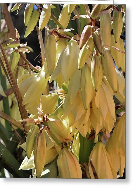 Yucca Bloom II Greeting Card