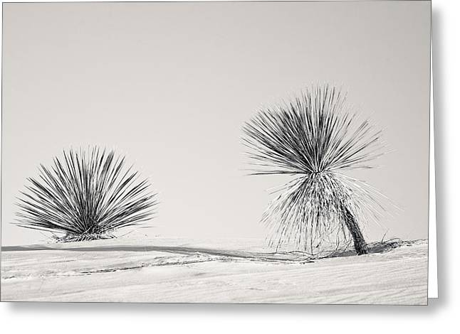 yucca in White sands Greeting Card by Ralf Kaiser