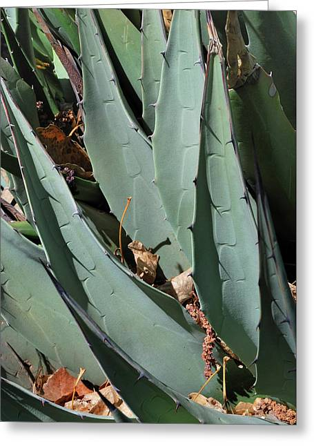 Yucca Leaves Greeting Card
