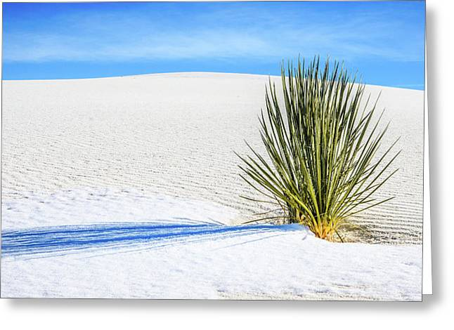 Yucca Greeting Card by Marla Hunt