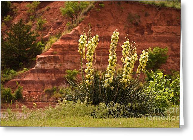 Yucca Plant At Great Salt Plains Lake Oklahoma Greeting Card by Fred Lassmann