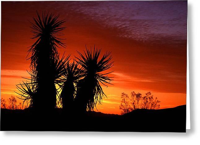 Yucca Sunrise Greeting Card by Eric Foltz