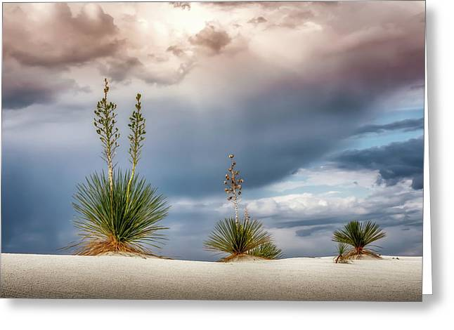 Yucca Three Greeting Card