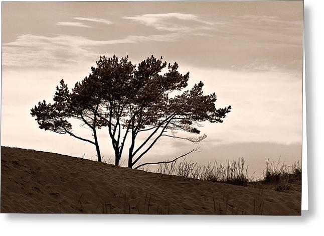 Greeting Card featuring the photograph Yyteri Evening by Jouko Lehto