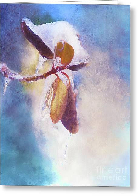 Winter Abstract - Snow And Ice On Rhododendron Leaves Greeting Card