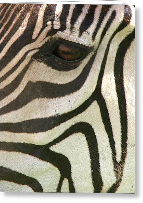 Z-eye Greeting Card by Donald Tusa