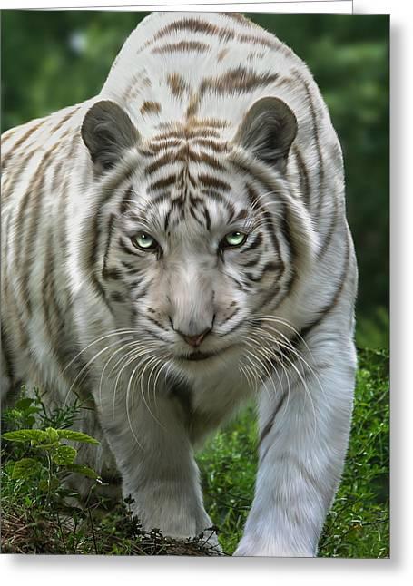 Tigress Greeting Cards - Zabu Greeting Card by Big Cat Rescue