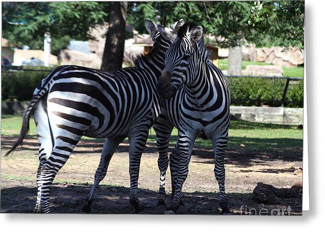 Zebra Buds Greeting Card