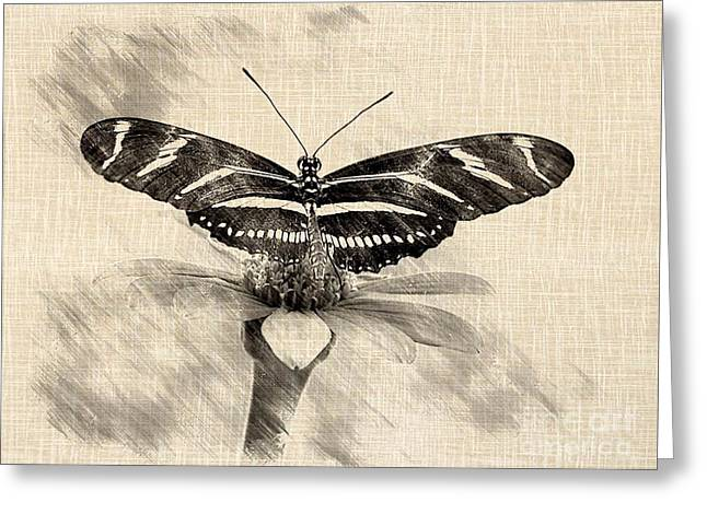 Zebra Butterfly Sketch Greeting Card