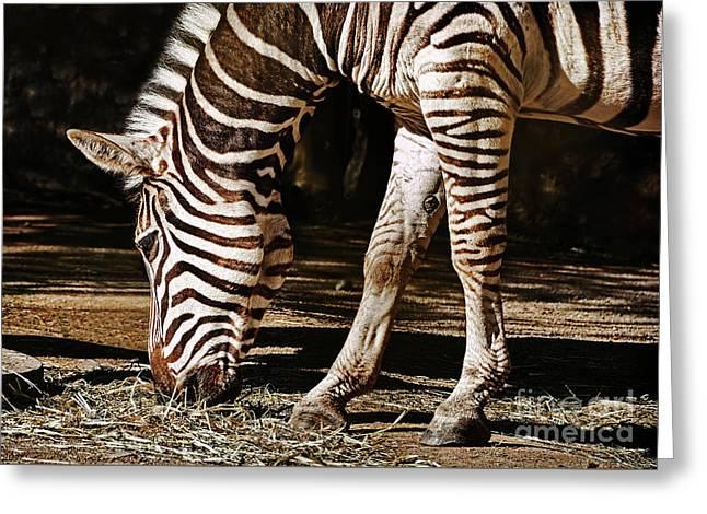 Zebra Eating By Kaye Menner Greeting Card