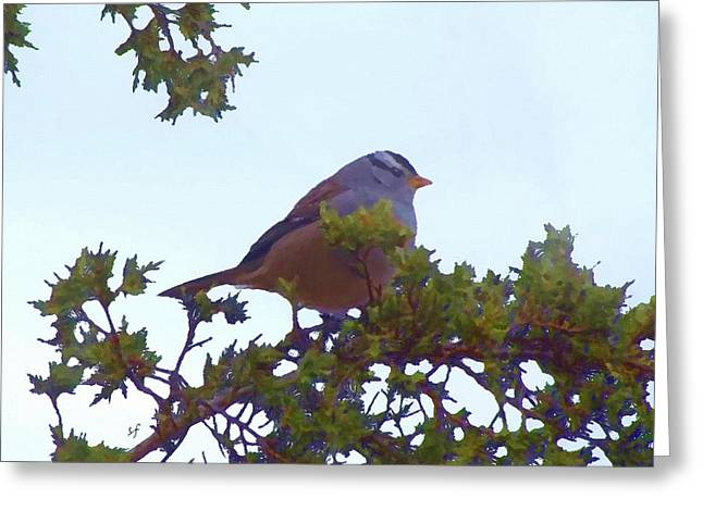 White Crowned Sparrow In Cedar Greeting Card