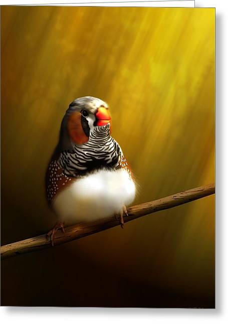 Zebrafinch Portrait Greeting Card by John Wills