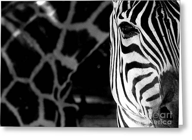 Zebra G Greeting Card by Tonya Laker