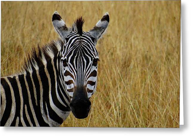 Zebra Half Shot Face On Greeting Card