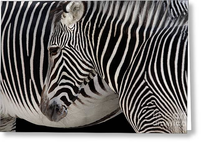 Equus Greeting Cards - Zebra Head Greeting Card by Carlos Caetano