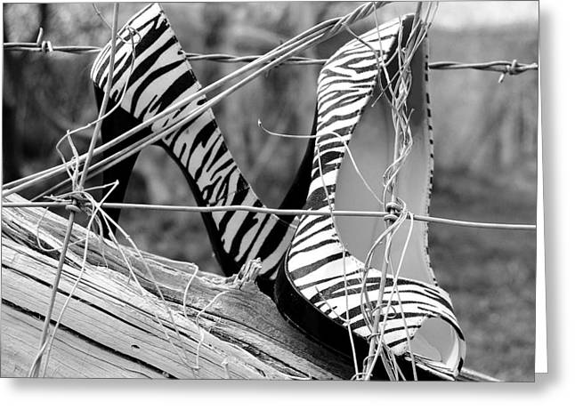 Zebra Heels And Barbed Wire Greeting Card