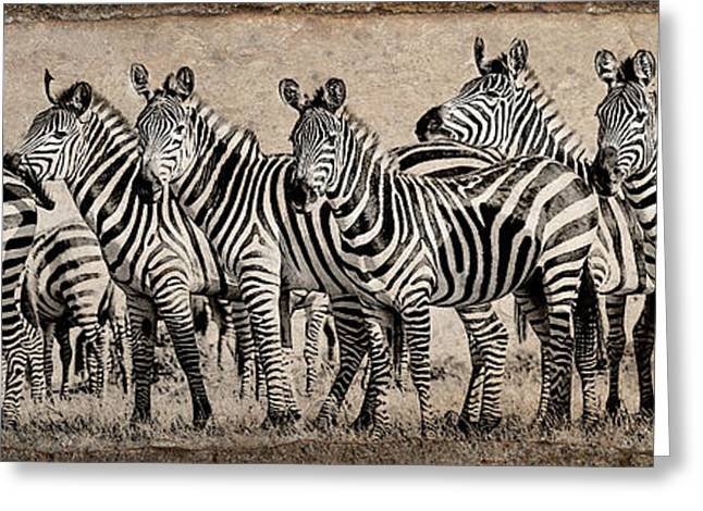 Greeting Card featuring the photograph Zebra Herd Rock Texture Blend Wide by Mike Gaudaur