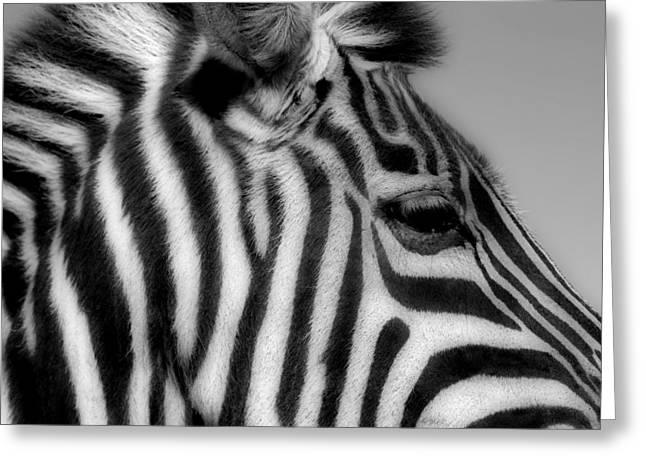 Zebra I Greeting Card by Christine Hauber
