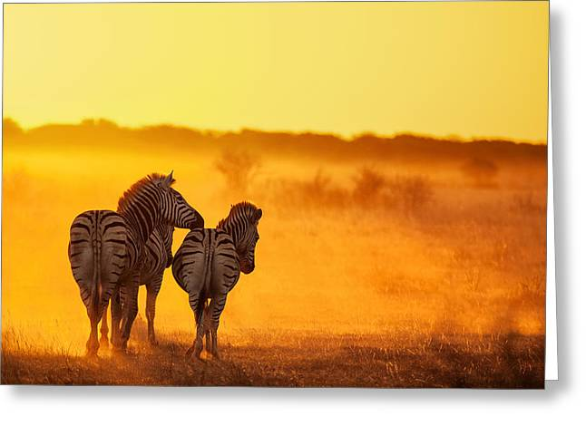 Zebra In The Light Greeting Card