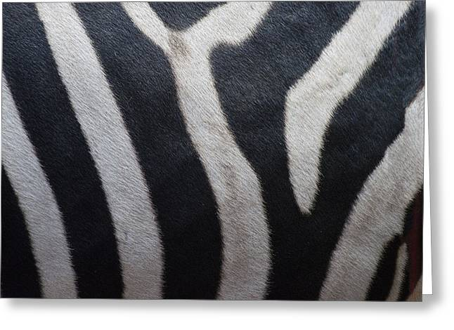 Zebra Greeting Card by Linda Geiger