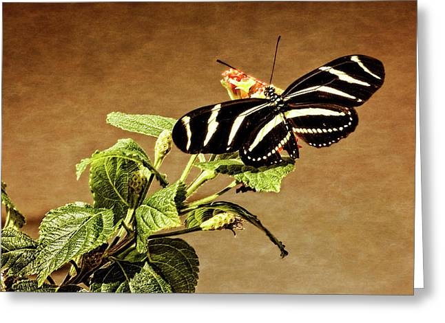 Greeting Card featuring the photograph Zebra Longwing by Dawn Currie