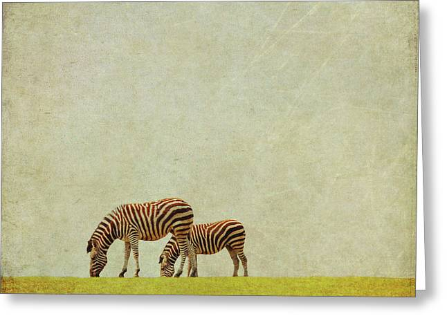Zebra Greeting Card by Lyn Randle