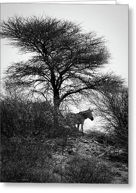 Greeting Card featuring the photograph Zebra On A Hill  by Ernie Echols
