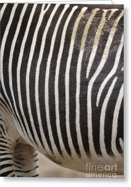 Zebra Pattern Greeting Card by David & Micha Sheldon