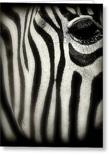 Zebra Greeting Card by Perry Webster