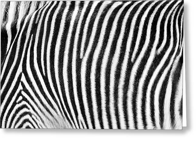 Zebra Print Black And White Horizontal Crop Greeting Card