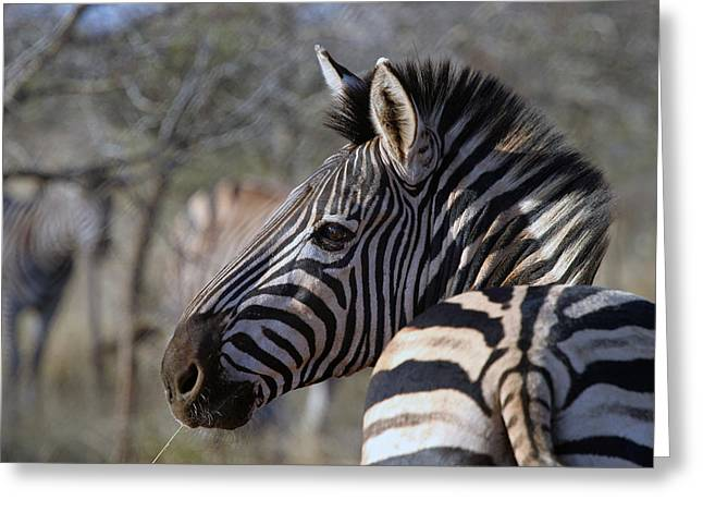 Greeting Card featuring the photograph Zebra by Riana Van Staden