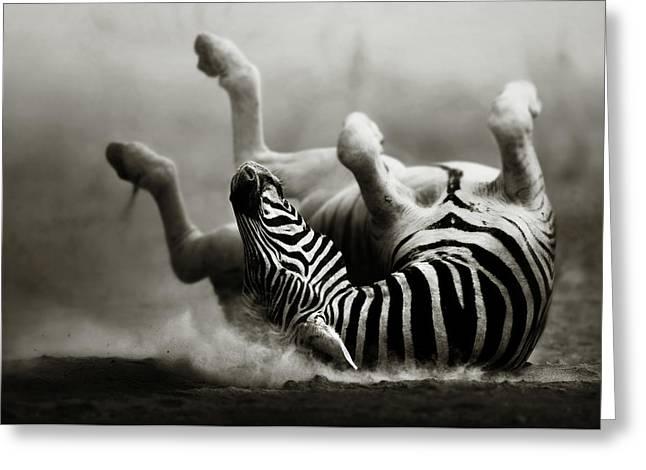 Zebra Rolling Greeting Card