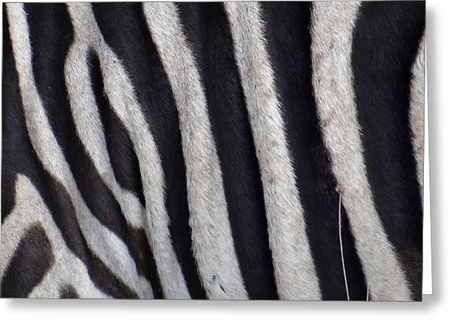 Zebra Skin Closeup Greeting Card