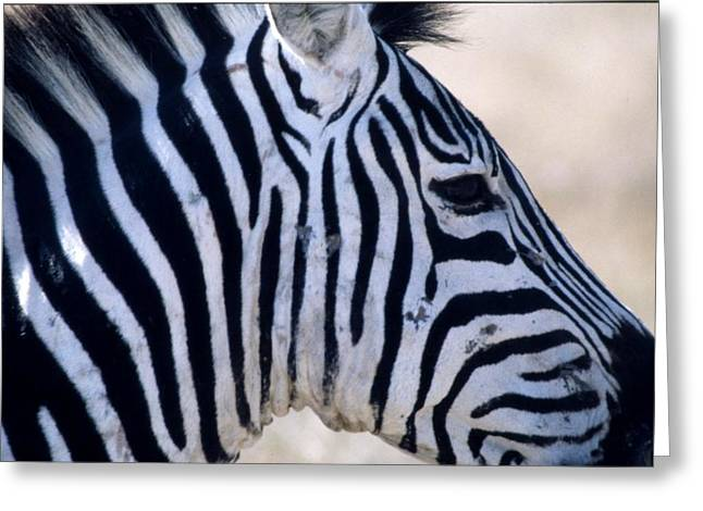 Zebra Stripes - Tanzania Africa Greeting Card by Christina Solstad