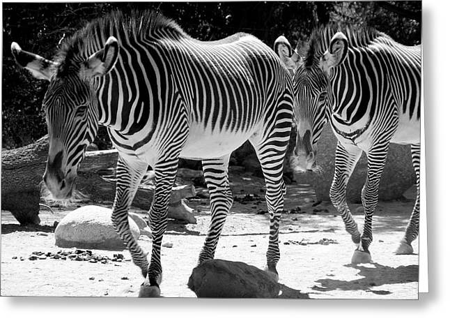 Zebra Stripes Greeting Card
