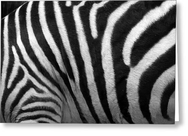 Zebra Stripes Greeting Card by George Jones