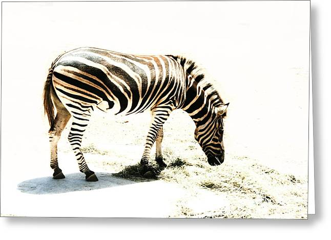 Zebra Stripes Greeting Card by Stephen Mitchell
