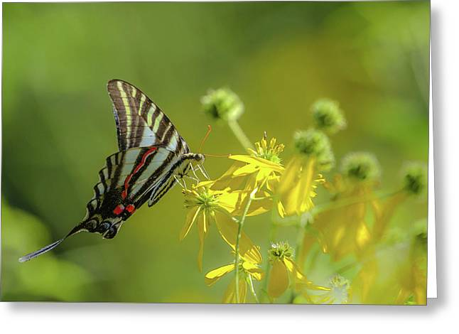 Greeting Card featuring the photograph Zebra Swallowtail Butterfly by Lori Coleman