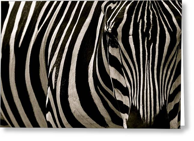 Zebra Up Close Greeting Card
