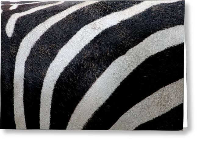 Zebra Wall Design 5 Greeting Card by Heike Hultsch