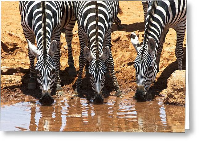 Zebras At The Watering Hole Greeting Card by Marion McCristall