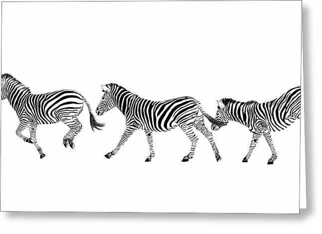 Zebras Dancing Greeting Card