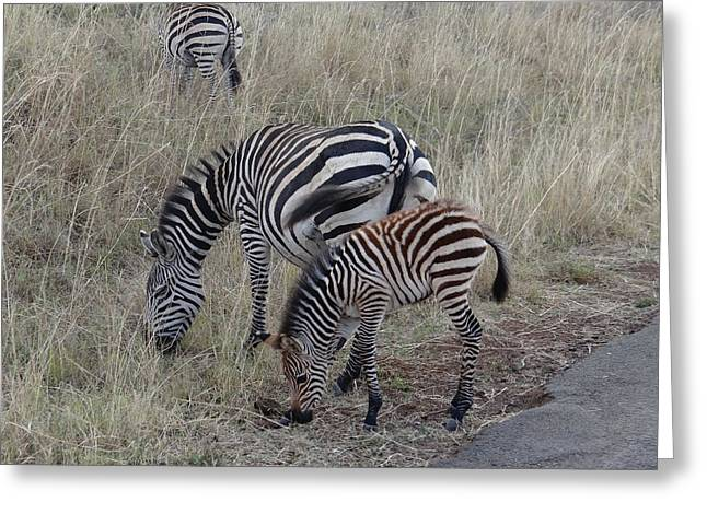 Zebras In Kenya 1 Greeting Card