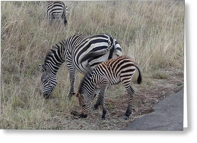 Zebras In Kenya 1 Greeting Card by Exploramum Exploramum