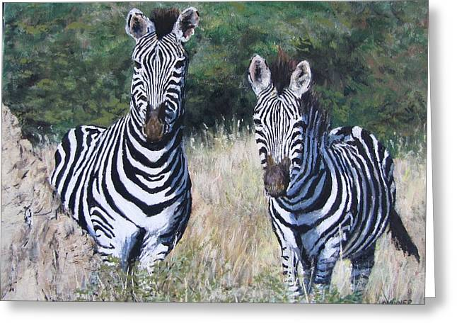 Zebras In South Africa Greeting Card