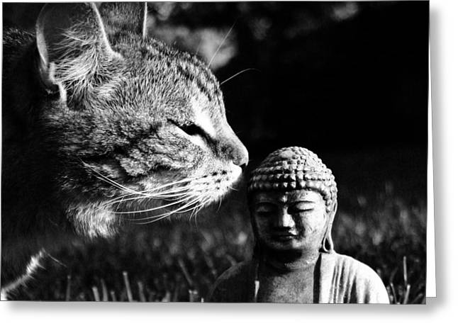 Zen Cat Black And White- Photography By Linda Woods Greeting Card by Linda Woods