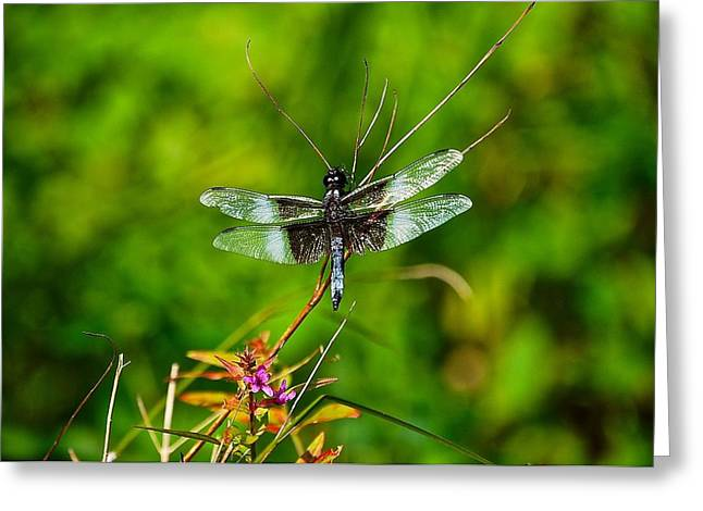 Zen Dragonfly 2 Greeting Card