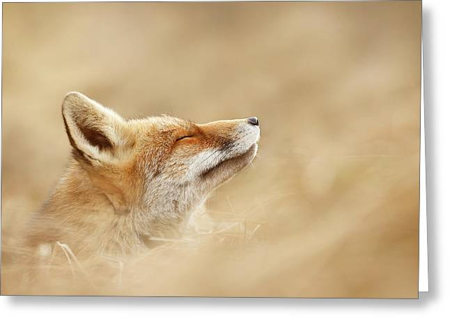 Zen Fox Series - Chill Fox Is Chilling Greeting Card